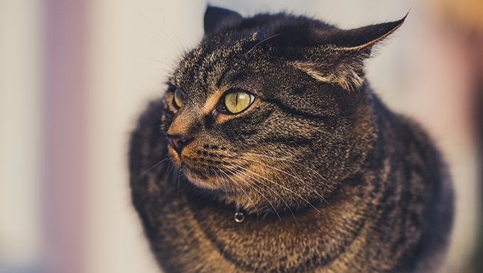 Cat Facts: 5 Amazing Facts About Your Cat's Ears - CatTime