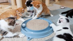 Cat Toys: Everything You Need To Know