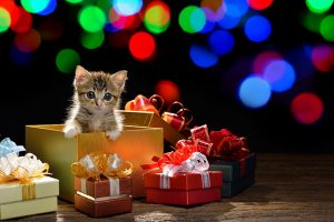 Kitten As A Christmas Present: Good Or Bad Idea?