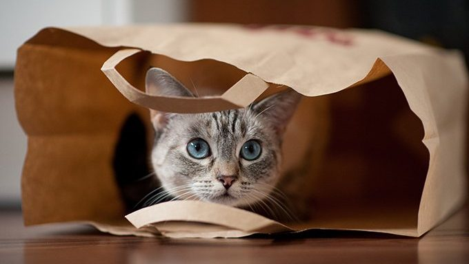 cat hiding in paper bag
