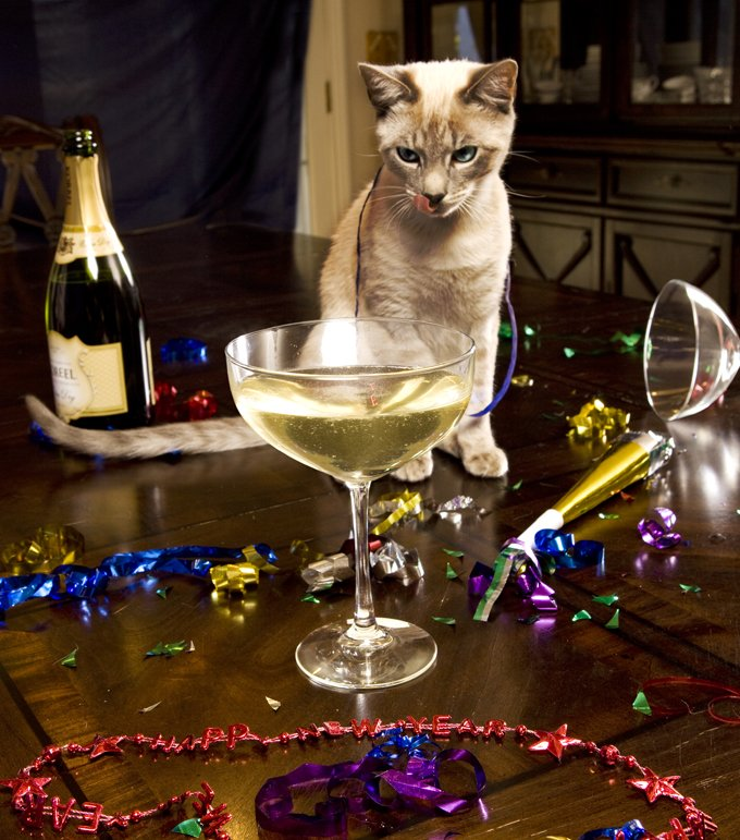 A Cat Owner S New Year S Resolutions Cattime