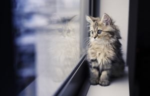 Dear Kitten: I'm Not Ready To Accept That You're Almost A Cat