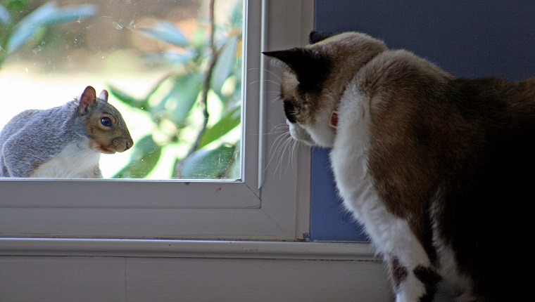 cat looking at squirrel on squirrel appreciation day