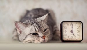 How Do I Deal With The Guilt Of Feeling Too Busy For My Cat?