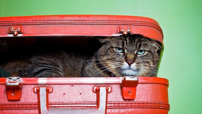 Image result for cat and luggage