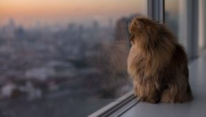 Why Do I Feel Guilty When I Stay Out Late While My Cat's Home Alone?