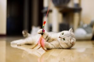 Why You Need To Play With Your Cat Even If You Hate It