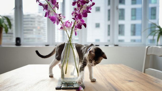 cat playing near houseplant