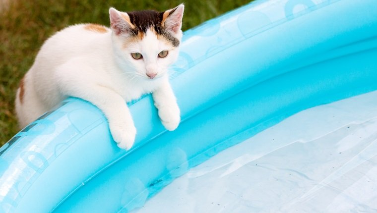 kitten balance at swim basin