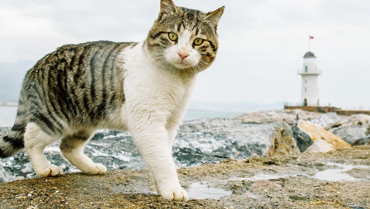 Portrait Of Cat Standing On Rock Against Cloudy Sky