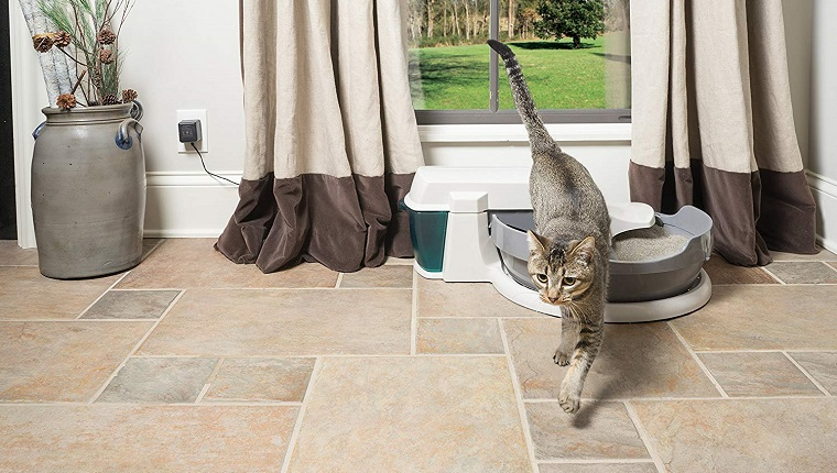 cat leaving automatic litter box