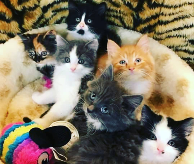 30 Cuddly Kittens For National Cuddly Kitten Day Cattime