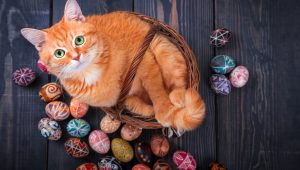Easter Safety Tips For Cat Owners