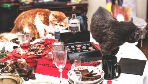 National Poison Prevention Week: Help Protect Cats From Poisoning