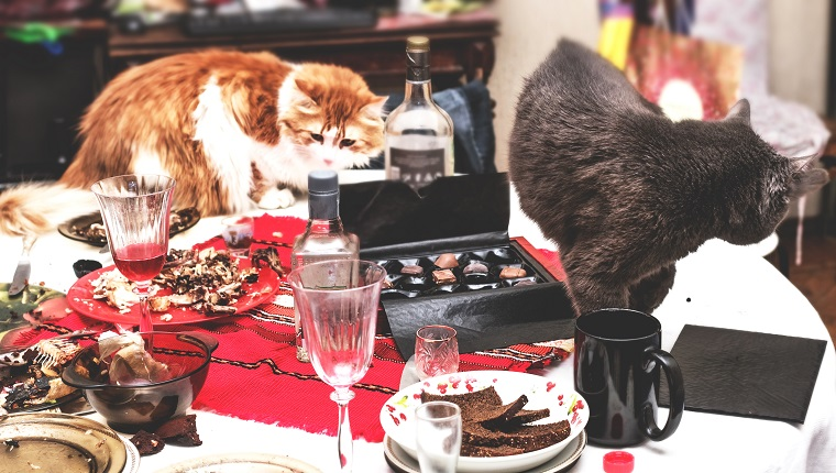 Two cats in really mess on morning table after big party