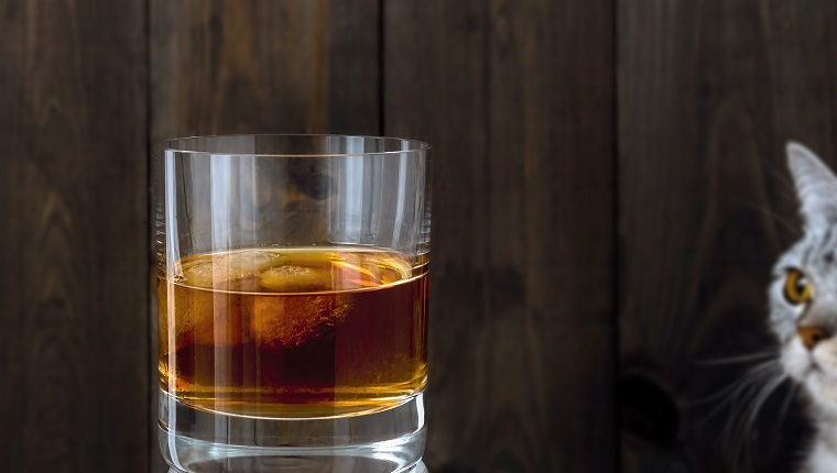 Cool drink. A glass filled with beverage and ice. Watching cat. Dark brown wooden background.