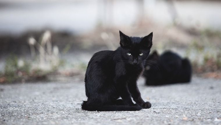 Photograph of a stray black cat puppy