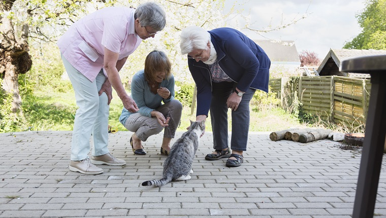 Senior women having fun with a cat outdoors in backyard