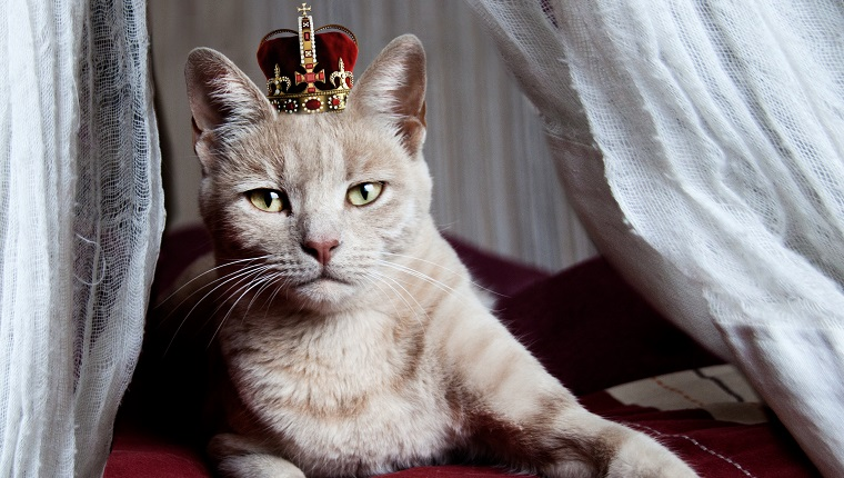 Why Cats Are Like Royalty