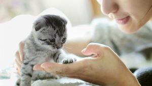 National Best Friends Day: 5 Ways To Celebrate With Your Cat