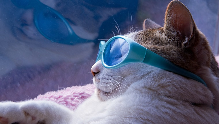 Cats sunglasses in summer