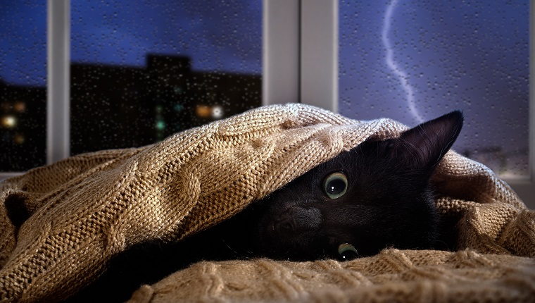 Cat scared of thunder and lightning outside the window. Kitten hiding under the blanket