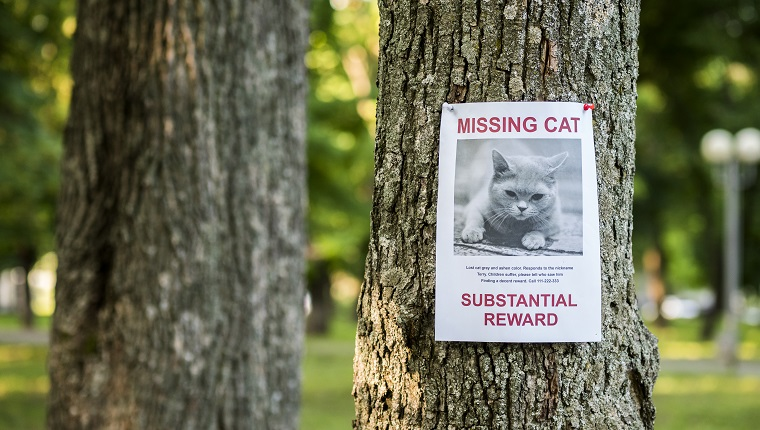 Banner with the announcement of the missing cat hanging on a tree in the park.