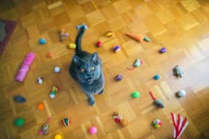 5 Easy Ways To Exercise Your Indoor Cat