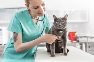 5 Diseases You Can Catch From Your Cat