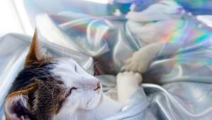 Rainbow Bridge Remembrance Day: 5 Ways To Memorialize Your Cat