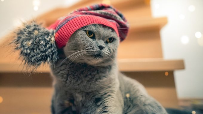 Cat in fall/winter hat