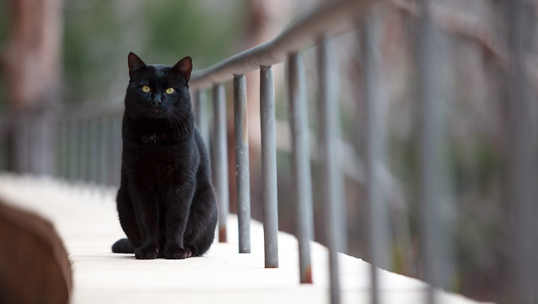 Black cat looking at the camera, Majorca, Spain