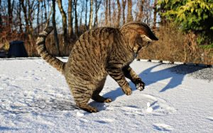 11 Cute, Cold-Weather Cats Loving The Snow [PICTURES]
