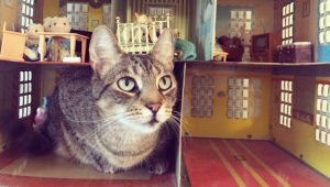 6 Fantastic Cat Houses From Around The World