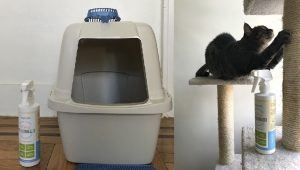 CatTime Review: Does Oxyfresh Pet Deodorizer Stop Litter Box Stink?