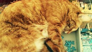 5 Cat Jigsaw Puzzles We Really Want To Complete This Holiday