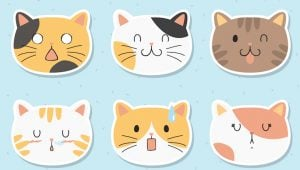 5 Awesome Cat Sticker Sets You Can Order Now!