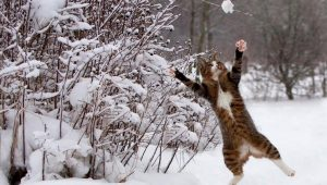 Cat Vs Snow: 5 Hilarious Winter Cat Videos