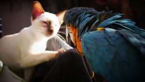 National Bird Day: 10 Cats Celebrating By Not Eating Birds [PICTURES]