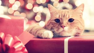 10 Cats Who Love National Re-Gifting Day