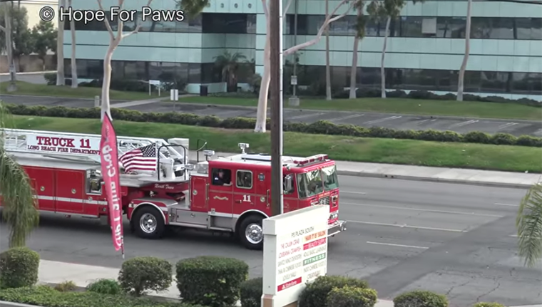 fire truck arrives to help hope for paws