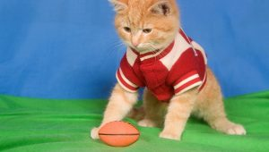 6 Super Bowl Party Safety Tips For Cats