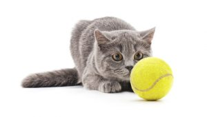 Play Tennis Day: Watch These Hilarious Cats Celebrate [VIDEOS]
