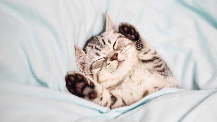 Kitten in bed
