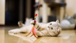 Cat Toys: Check Out A Few Of Our Favorites For Fun-Loving Kitties