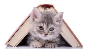 International Children's Books Day: 5 Classic Cat-Themed Books For Kids