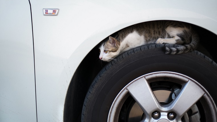 Cat Sitting On Car Tire