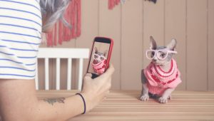 The 5 Best Cat Videos You Need To Watch For April