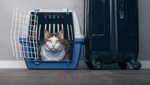 Cat Carriers: Which Kind Is Right For Your Cat?