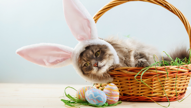 Cat in easter basket